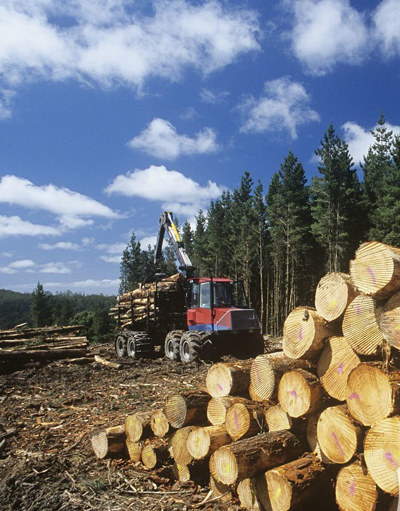 Agriculture-and-forestry1.jpg